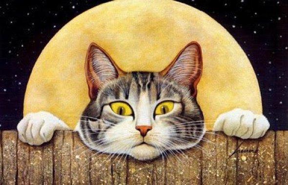 Moon Cat, Lowell Herrero