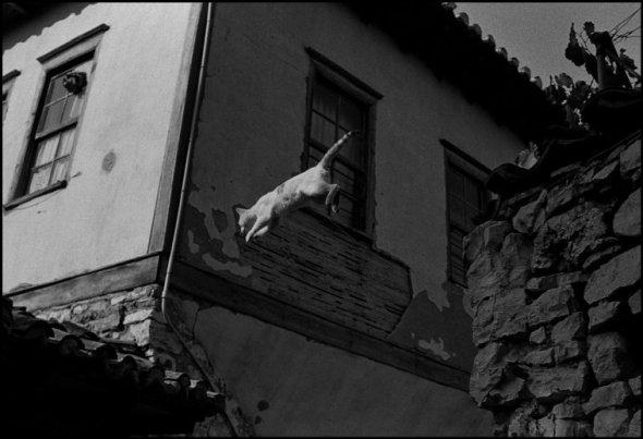Cat, 1984 Albania, Ferdinando Scianna