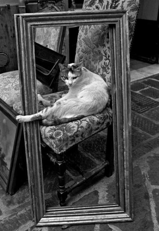 Cat in Frame, Ferdinando Scianna