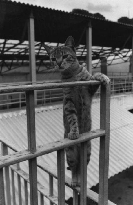 Climbing Cat, 1993, Ferdinando Scianna