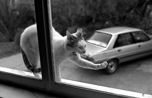 Stretching Cat, 1989 Ferdinando Scianna