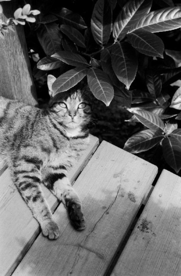 Jean Gaumy, Cat in the Plants