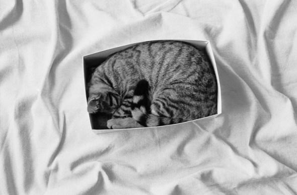 Our cat Pataud, 1999 Jean Gaumy