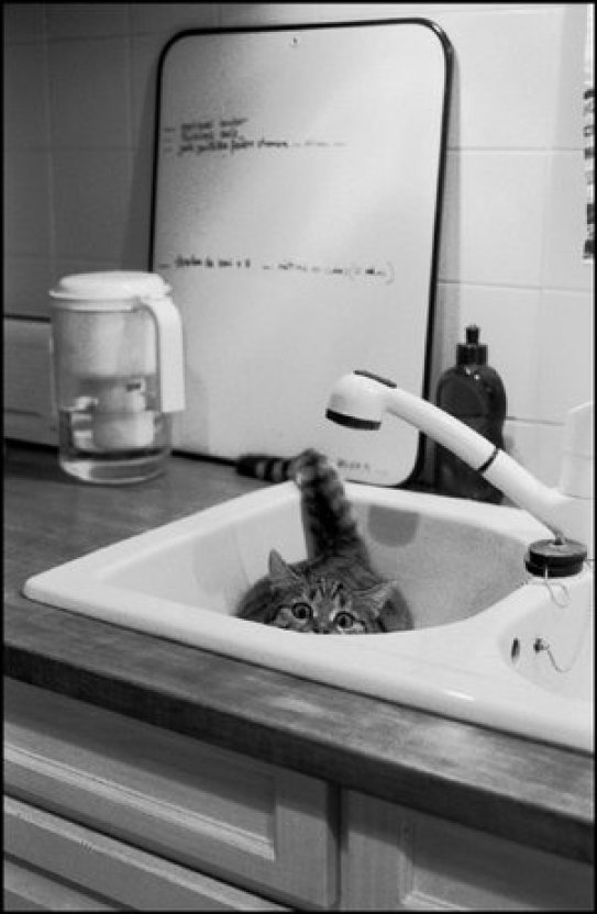 Pataud in the Sink, Jean Gaumy