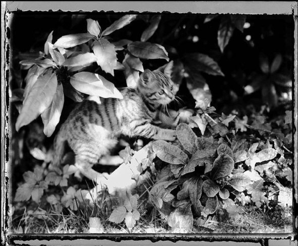 Pataud the Cat,  1999-2 Jean Gaumy