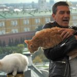 Antonio Banderas Puss n Boots, famous cat lovers