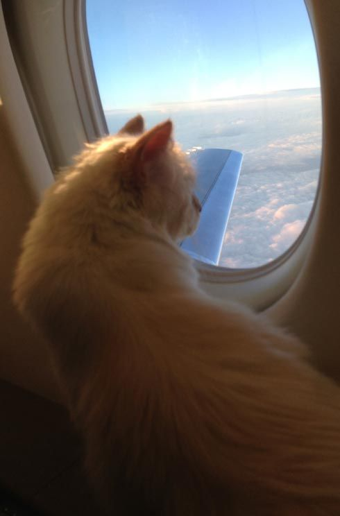 Karl Lagerfeld and Choupette on plane
