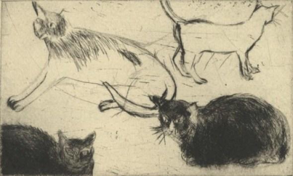 Cat Sketch, Elizabeth Blackadder