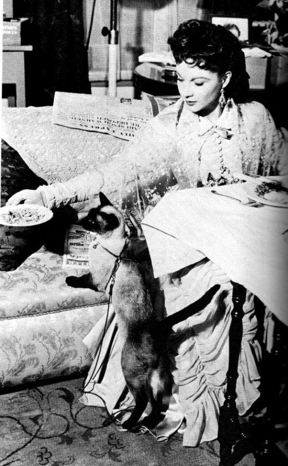 Vivien Leigh as Anna Karenina feeding her siamese New Boy on set, 1948