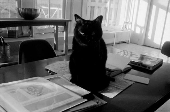 Josef Koudelka, Black Cat, Israel