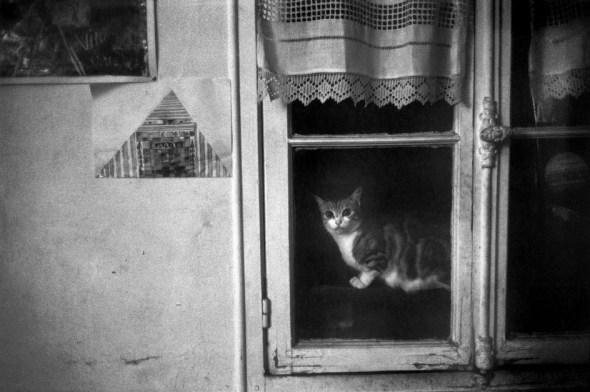 Josef Koudelka FRANCE, 1975 Cat in Window