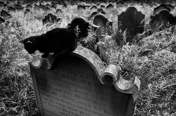 Josef Koudelka, GREAT BRITAIN. England, Cat in Cemetery, 1978