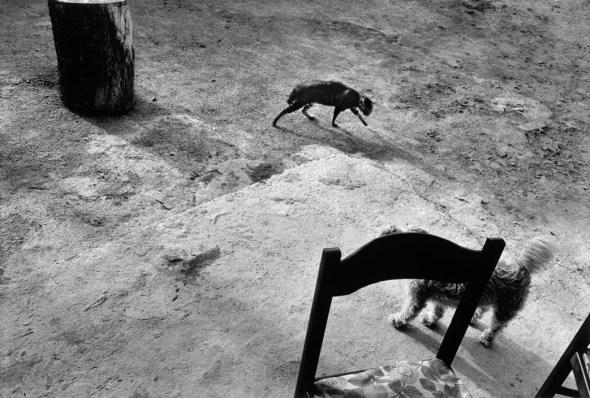 Josef Koudelka, Cat, Italy 1981