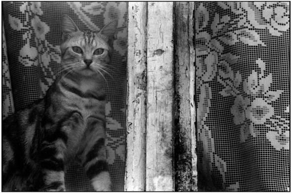 Cat in a Window, Paris, 1984, Quartier de Belleville Martine Franck