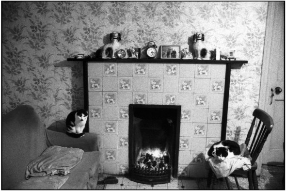 Two Cats, Donegal County. Tory Island, Ireland, 1993 Martine Franck