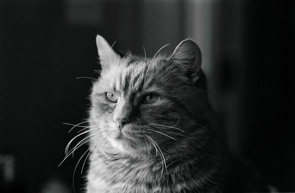 Cat, Jane Bown