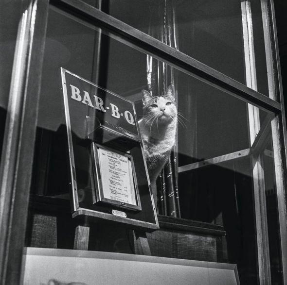 Jane Bown, Cat in a Restaurant Window, Penzance, 1960