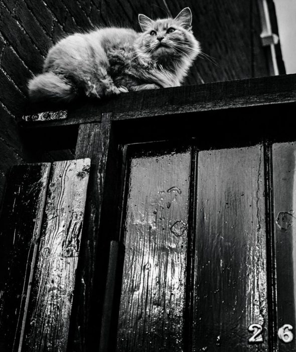 Jane Bown, Cat on a Door Sill