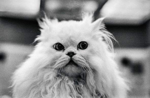 White Cat, Jane Bown