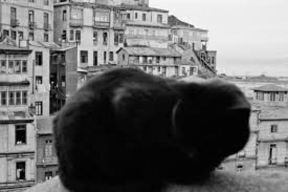 Black Cat, Sergio Larrain