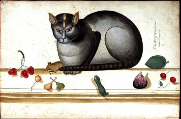 Ulisse Aldrovandi (Italian, 1522-1605) - Cat on ledge with mouse and fruit, c. 1580