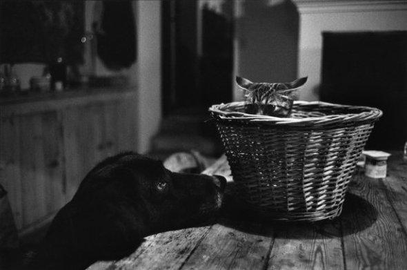 Richard Kavlar, Dog Bothering a Cat in a Basket, 1977