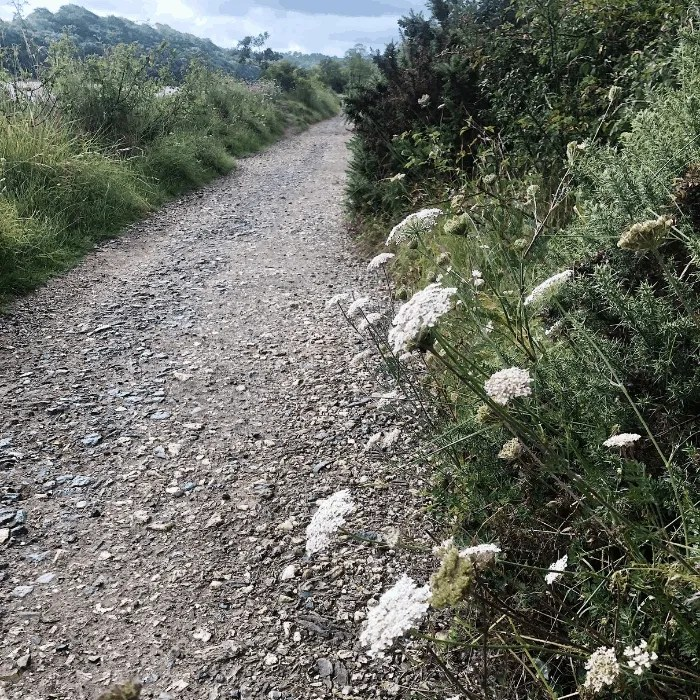 The path from Tresillian to St Clement with wild flowers
