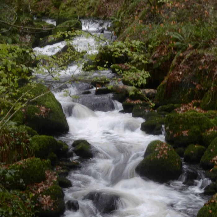 a river flowing over moss covered rocks at Kennall Vale