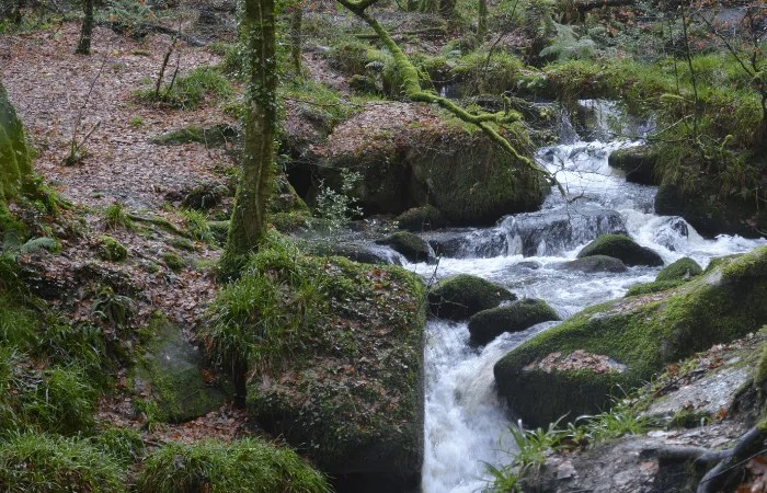 Water flowing over oss covered rocks