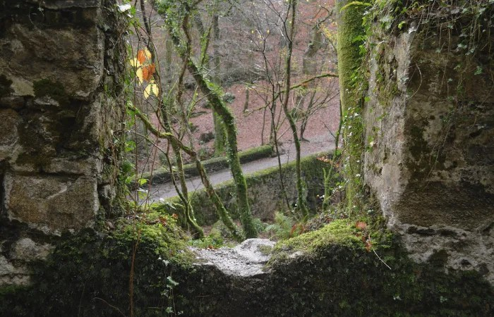 Part of a ruin looking out onto a forest