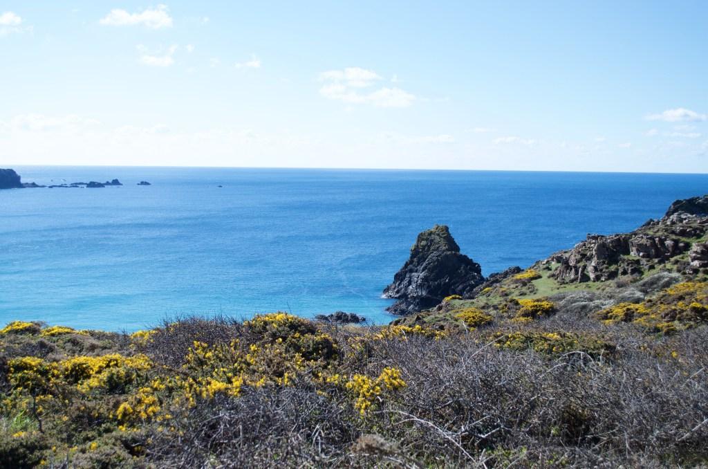 Sea and gorse on the coast