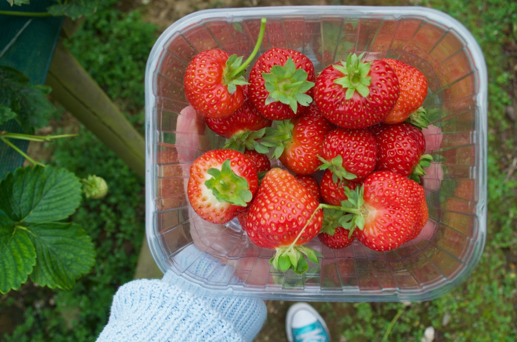 a hand holding a punnet of strawberries