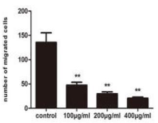 褐藻醣膠降低癌細胞轉移