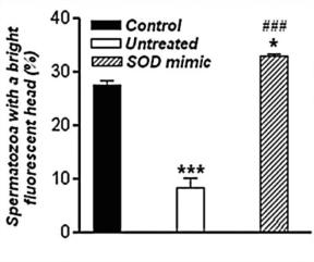 左旋精胺酸一氧化氮精子