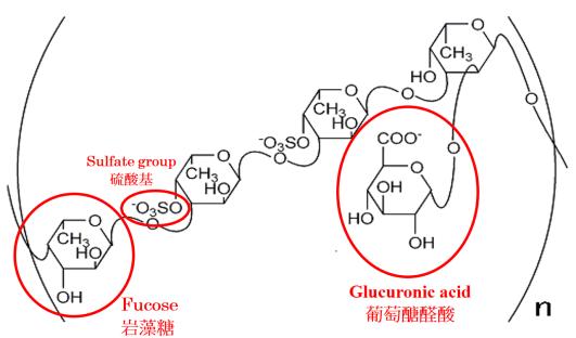 褐藻醣膠推薦選擇小分子褐藻糖膠嗎