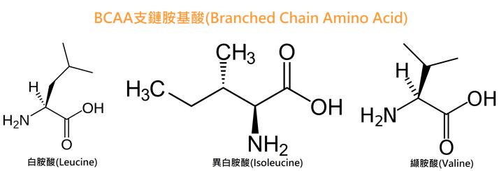 BCAA支鏈胺基酸是什麼