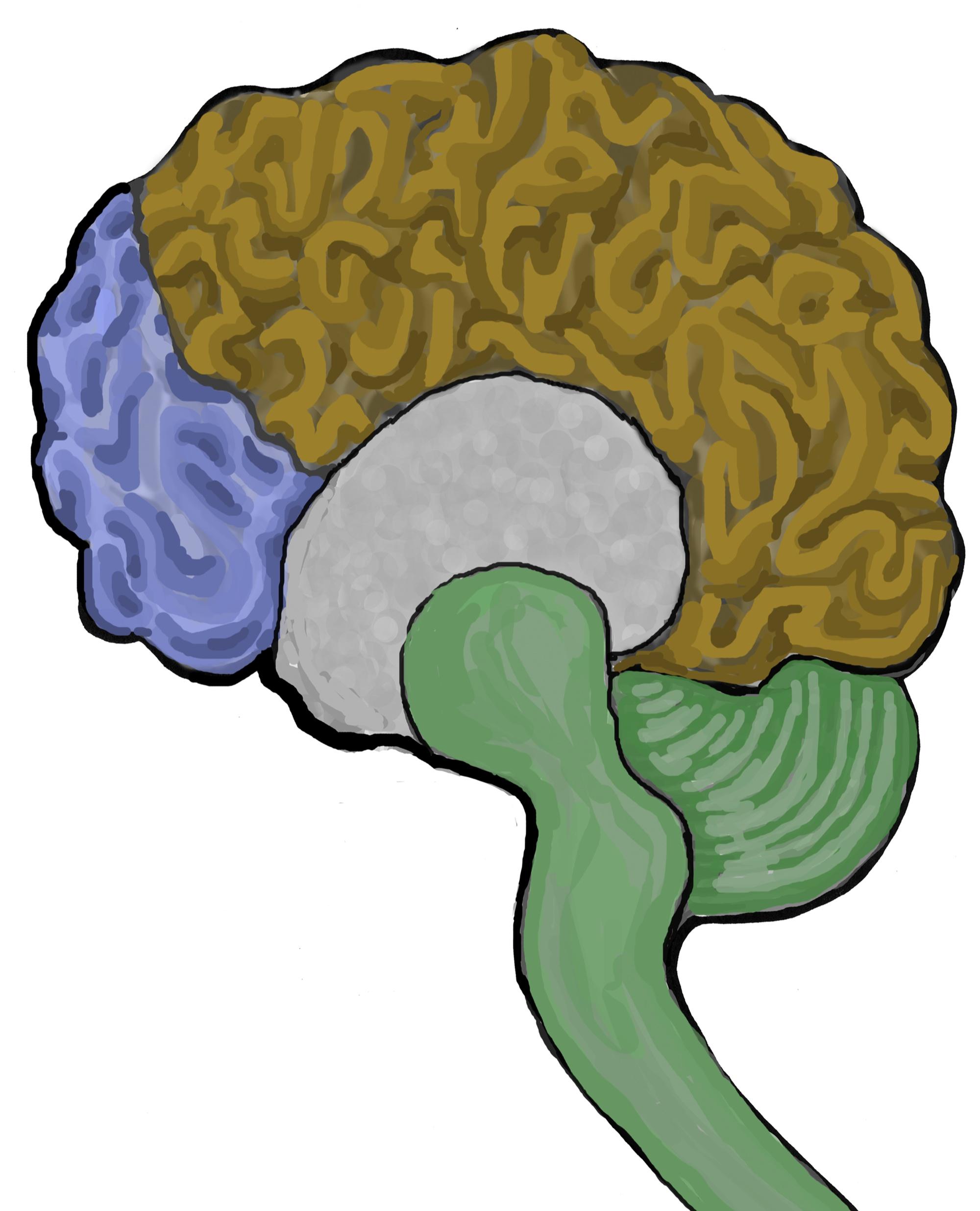 Neocortex: Dr. Daniel Siegel On 'Mindsight' « Giraffe Mindsight