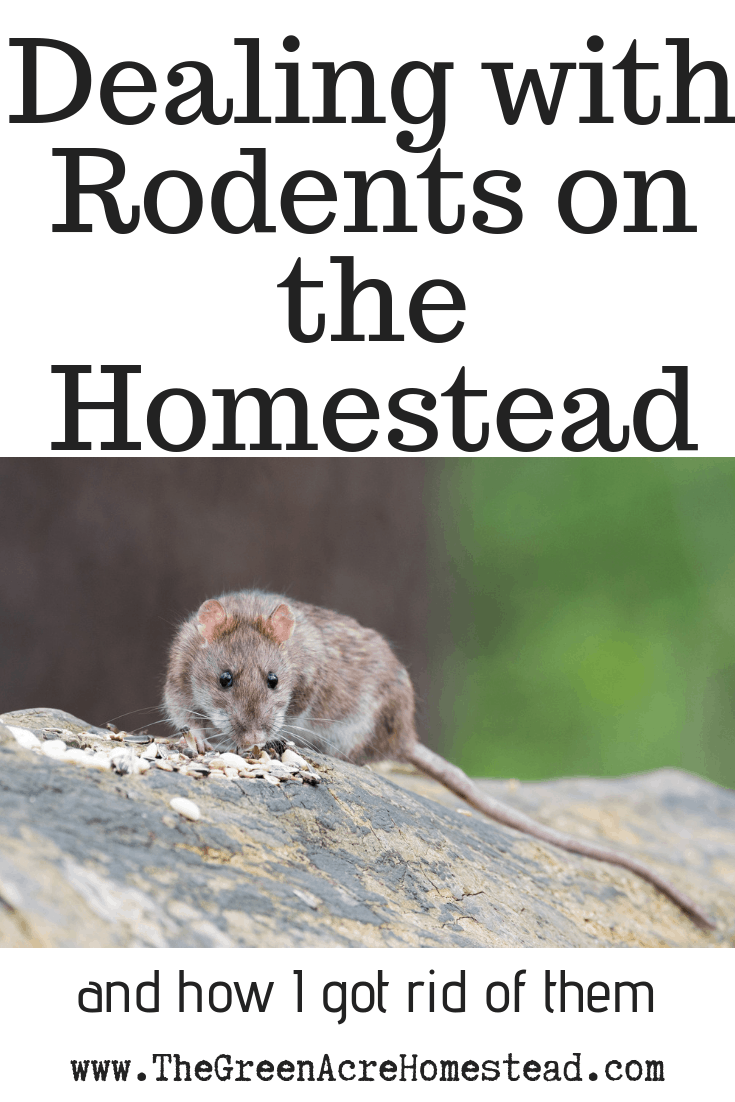Rodents on the Homestead (1)