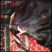 green diva gracie mae with her Stand up to Cancer leash