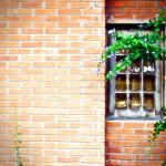 Casas mais baratas! Brasileira desenvolve técnica que produz tijolo a partir de lixo
