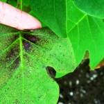 4 plantas que alertam se ar que respiramos está poluído