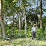 Indiano planta sozinho floresta do tamanho de 800 campos de futebol