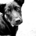 Itália oferece desconto no imposto para quem adota cão