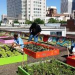 Conheça a incrível horta orgânica cultivada por moradores em situação de rua