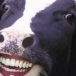 Vegetariano: ser ou não ser?