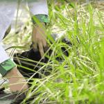 Conheça o primeiro telhado verde do mundo que também produz eletricidade