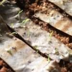 Essa pode até jogar no chão! Bituca de cigarro biodegradável vira árvore