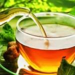 383 plantas com propriedades medicinais que podem substituir os remédios alopáticos
