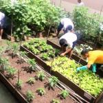 Presos do AM cultivam próprios alimentos em horta (e ganham redução de pena)