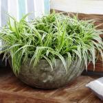 19 plantas que a Nasa recomenda que você tenha em casa para purificar o ar